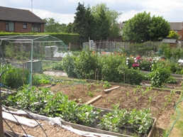 ../fg-gardens15/Allotments_6_11.JPG""